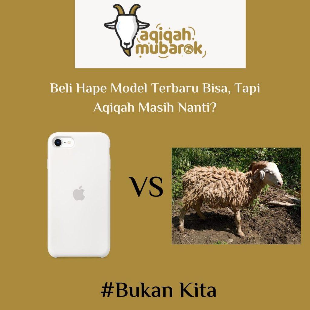 Harga Domba Untuk Aqiqah